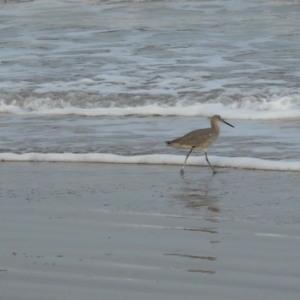 bird at edge of water