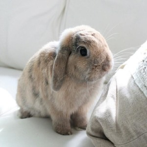 Cookie the Bunny