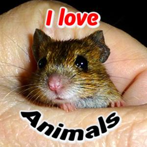 animals012