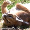 Lioness08332