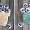 Pansy Pots, Two Ways: Cookies and Photo by Melissa O'Regan