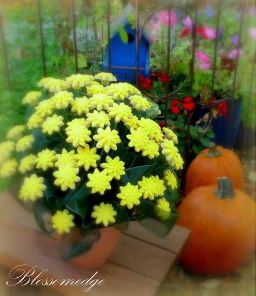 Yellow Mum Cookie Bouquet - Floral Cookies - Bouquet