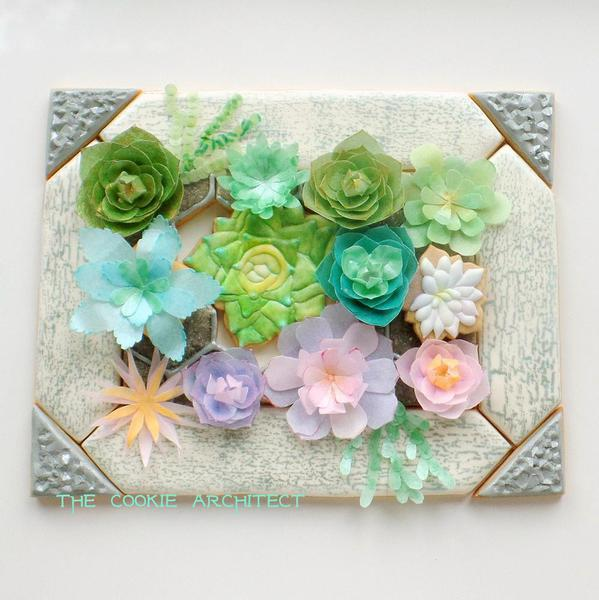 #7 - Succulents Framed by The Cookie Architect
