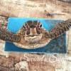 #7 - Sea Turtle: By Delorse