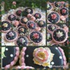Handpainted Roses: Cookies and Photos by Teri Pringle Wood