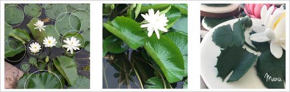 Flower image border