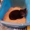 Kitty Litter: Photo Courtesy of Heartland Humane Society of Missouri