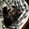 Pouch Baby: Photo Courtesy of Heartland Humane Society of Missouri