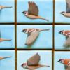 Bird in Flight Cookies - Where We're Headed!: Cookies and Photo by Aproned Artist