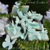 Butterflies in Secret Garden: By The Tailored Cookie