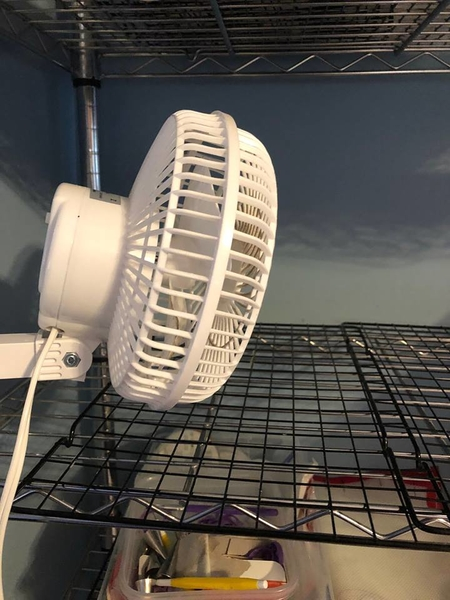 clamp fan to dry royal icing