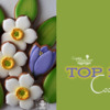 Top 10 Cookies Banner - March 16, 2019: Cookies and Photo by My Lovely Cookie; Graphic Design by Julia M Usher