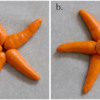 Steps 1a and 1b - Pipe Sea Star Arms and Body: Photos by Aproned Artist