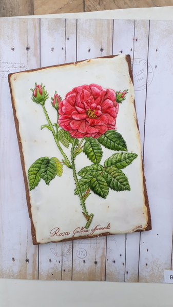 #4 - Old Roses by Elke Hoelzle