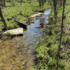 Creek on Three Spring Farms: Photo by Julia M Usher