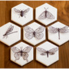 Final Insects in Flight Set: Cookies and Photo by Aproned Artist