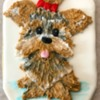 Brush Embroidery Yorkie Cookie: Cookie and Photo by sylviawilson