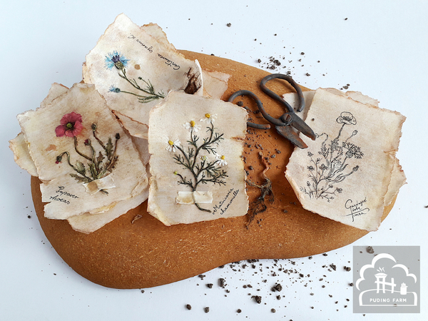 #8 - Herbarium by PUDING FARM