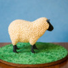 Sheep Cookie - Where We're Headed!: 3-D Cookie and Photo by Aproned Artist
