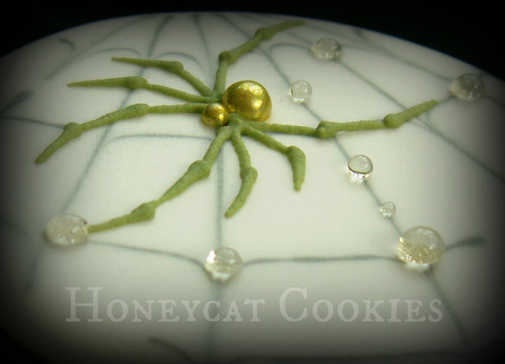 Honeycat Spiders! (35)