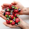 Mini Ladybug Shortbread Cookies