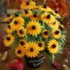 Black-eyed susan cookie bouquet
