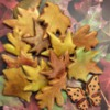 Fall Leaves and Butterfly