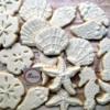 Seashell Platter