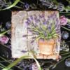 Lavender Road Trip