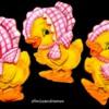 Ducks In Bonnets