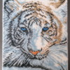 White Tiger|Sweet Prodigy