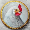 Portrait of a chicken :)