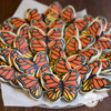 Monarch Butterflys Maddy Ds