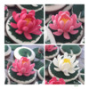 Royal Icing Water Lilies: Design and Photo by Manu