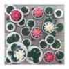 Water Lilies | Manu