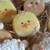 The chicks