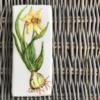 Handapainted Cookie, Bulb Flower: Daffodil