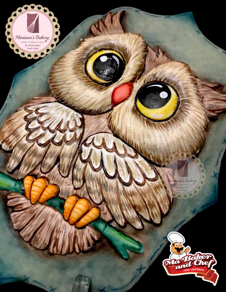Owl Close-up