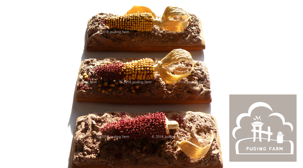 Harvest - Corn Cobs