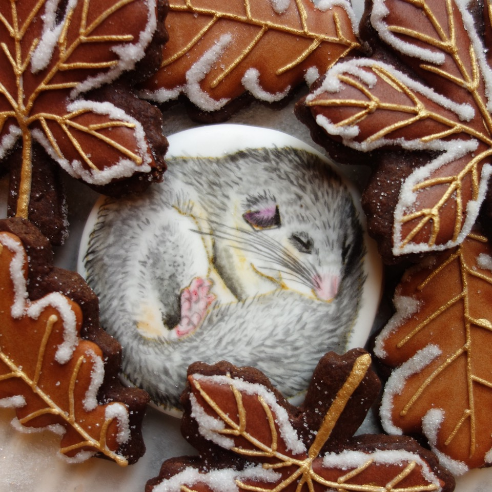 Sleeping Dormouse