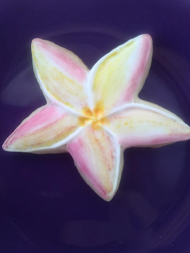 Variegated White Plumeria Flower