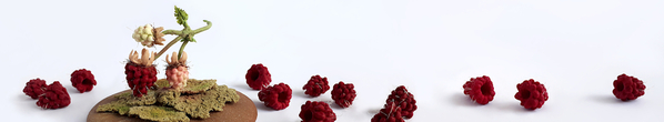 banner_pf__2020_fragrance_of_raspberries