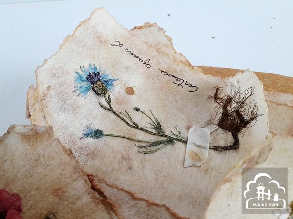 pf__2020__herbarium_03