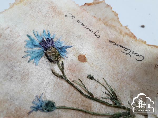 pf__2020__herbarium_04