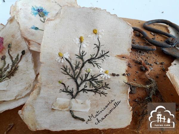 pf__2020__herbarium_06