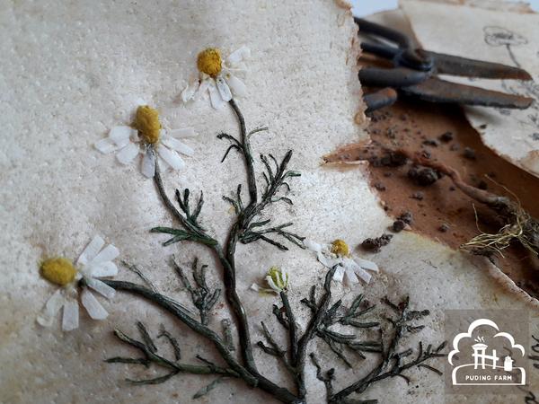 pf__2020__herbarium_07