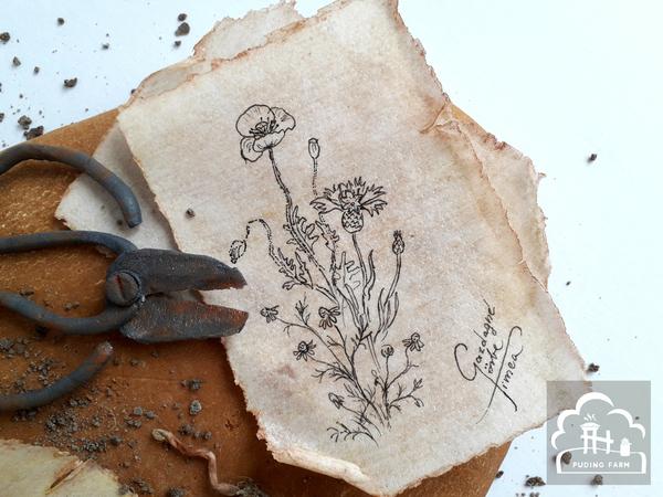 pf__2020__herbarium_09