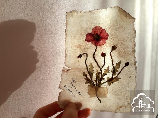 pf__2020__herbarium_TUTORIAL_10