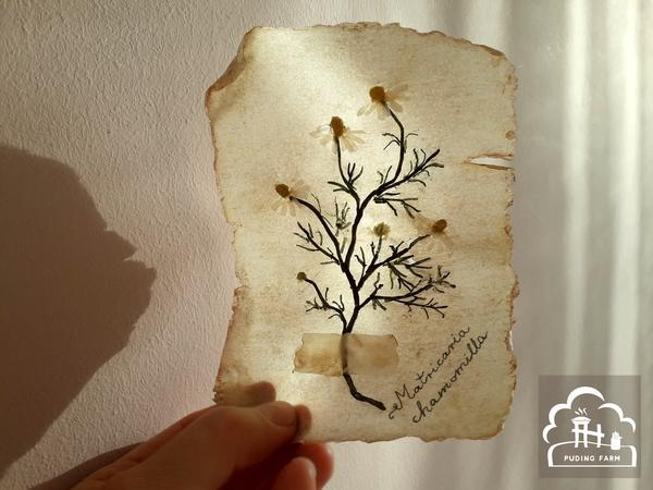 pf__2020__herbarium_TUTORIAL_13