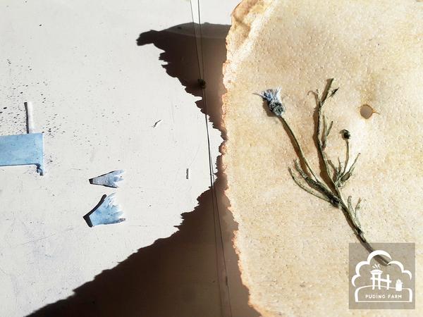pf__2020__herbarium_TUTORIAL_15